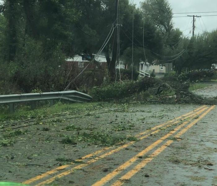 Fallen tree crushes guard rail by road
